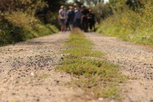 Chemin_de_randonnee_stage_de_jeune_et_rando (1)